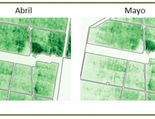 Ventajas del uso de índices de clorofila para el seguimiento de cultivos