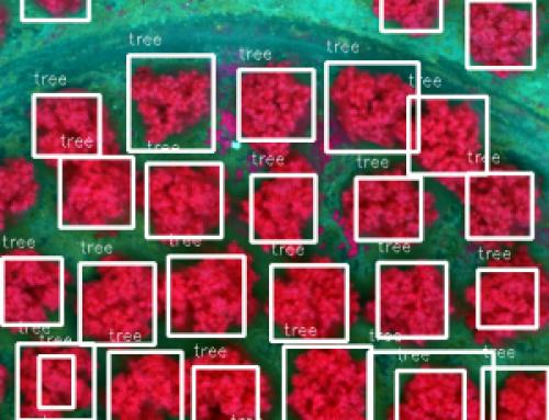 Inventario automático de cultivos con drones y machine learning en Mapsens® Agro
