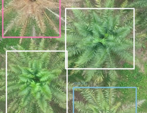 Detección y estimación del estado de salud automáticas de palma aceitera